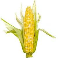 corn-thumb-200x200-2252